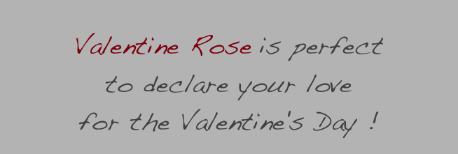 Valentine Rose is perfect 